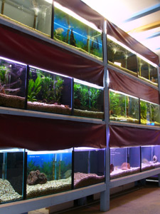 Aquariums At Cranbourne - 14 Cooper Court, Cranbourne's vast array of display tanks